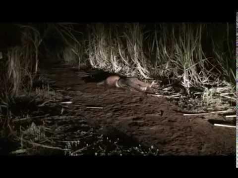 Corpo é encontrado decapitado na Mata São João entre Terra Boa e Engenheiro Beltrão
