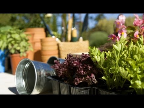 Five Tips for New Gardeners | At Home With P. Allen Smith