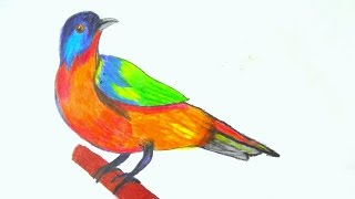 How To A Draw Birds With Pencil Pencil Coloring And Drawing Birds