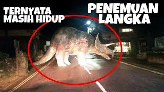 Video DInosaurus Nyata.. keren bray MP3, 3GP, MP4, WEBM, AVI, FLV Desember 2017