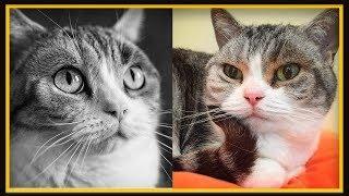 Jellie Needs Your Help!     (Minecraft 1.14 9th Cat skin Contest Vote)