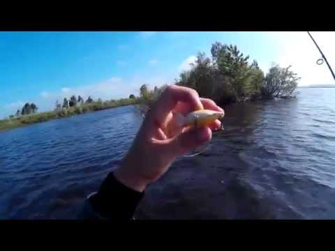 ловля на спиннинг на реке которосль