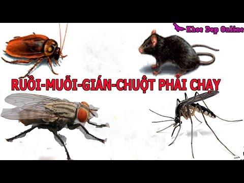 Mẹo khiến ruồi muỗi gián chuột phải chạy ra khỏi nhà
