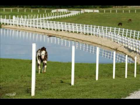 Missouri Horse Farm for Sale-.mpg