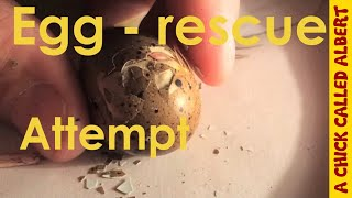 Video Do not help a hatching egg. MP3, 3GP, MP4, WEBM, AVI, FLV September 2018