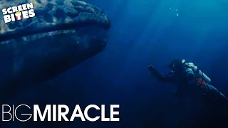 Nonton Big Miracle: Ice Diving (ft. Drew Barrymore, Rachel and John Krasinski, Adam) Film Subtitle Indonesia Streaming Movie Download