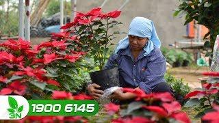 Nông nghiệp | Hưng Yên: Người dân làng hoa Xuân Quan mong muốn tiếp cận nông nghiệp du lịch