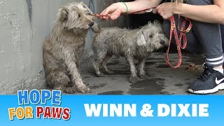 Video Two dogs in the sewer cried for help until someone heard them!!! MP3, 3GP, MP4, WEBM, AVI, FLV Oktober 2018