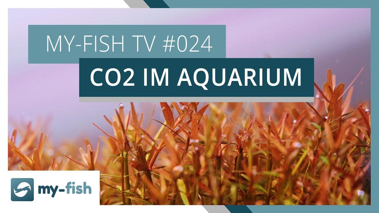 my-fish TV - Deine Nr. 1 Anlaufstelle für alle Themen rund um die Aquaristik 40