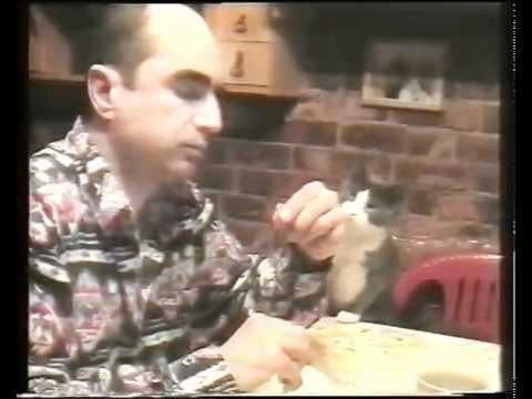 Γάτα χρησιμοποιεί τη νοηματική γλώσσα για να ζητήσει τροφή!