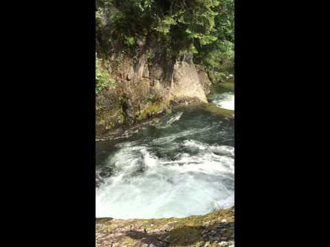 Miehen tippuminen puusta jokeen saatiin kuvattua – Alkoholilla oli osuutta asiaan