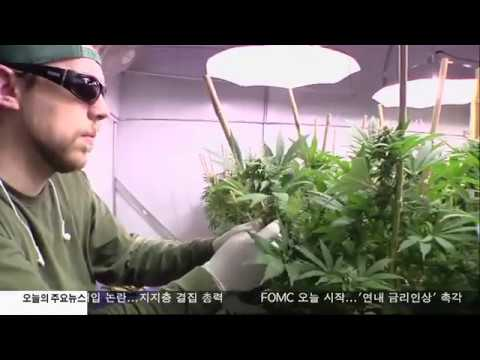 LA, '마리화나 단속 조례안' 폐지 추진 11.1.16 KBS America News