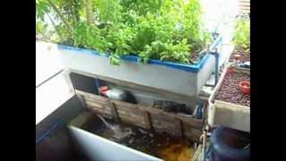 Cubao Philippines  City pictures : Aquaponics Philippines Cubao