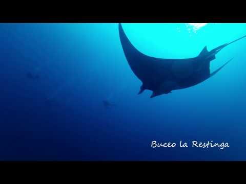 Buceo la Restinga. Manta en El Hierro, Islas Canarias