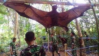 Nonton GIANT BAT CAPTURED, WHAT IS IT? Film Subtitle Indonesia Streaming Movie Download