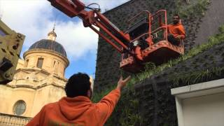 Vertical garden in Elche - Construction process
