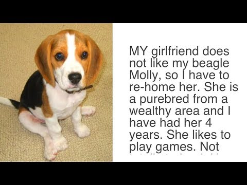 Girlfriend Tells Boyfriend 'Either The Dog Goes Or I Go' – Man's Reply Wins The Internet