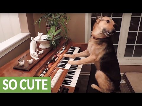 This compilation of smart dogs will leave you astonished!