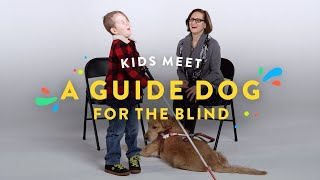 Video Kids Meet a Guide Dog for the Blind | Kids Meet | HiHo MP3, 3GP, MP4, WEBM, AVI, FLV Februari 2018