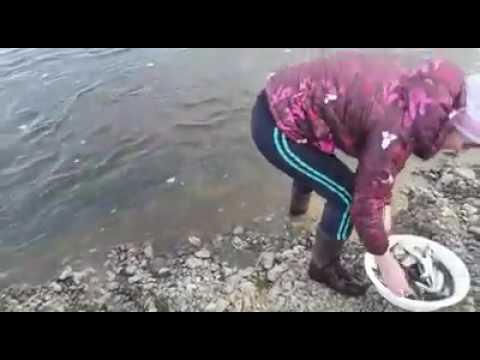 ловля корюшки пауком на реке бурная