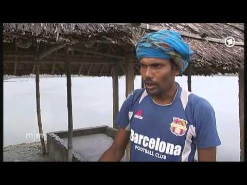 Meeresfrüchte ohne Chemie: Shrimps aus Bangladesh