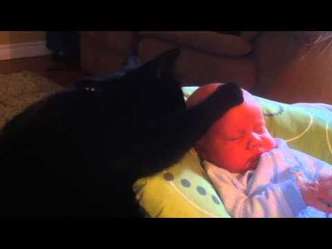 cute cats - Our cat Stewie helps put our new baby Connar to sleep... cutest bit is right at the end!