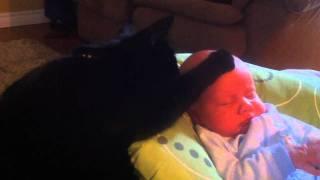 Кот и плачущий ребёнок…