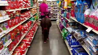 Miniature Donkey goes Shopping! [cute animal videos] (funny animals)