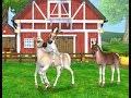 Star Stable Horses 3 Eu Buguei O Jogo