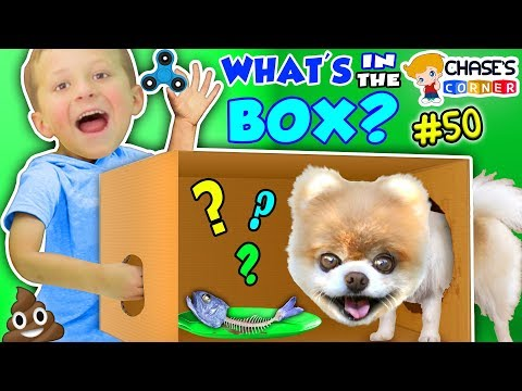 Chase's Corner: WHAT'S IN THE BOX? (#50 | DOH MUCH FUN Challenge) (видео)