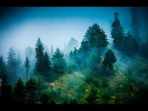 Zen Reiki Meditation Music: Relaxing Instrumental Music for Yoga, Massage, Meditation, Healing ☯071
