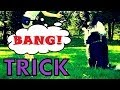 Bang Trick - How to teach the best dog trick EVER