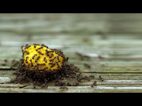 Natural Ways To Get Rid Of Ants Without Using Pesticide