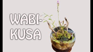 Carnivorous Wabi-kusa- start to finish by Rachel O'Leary
