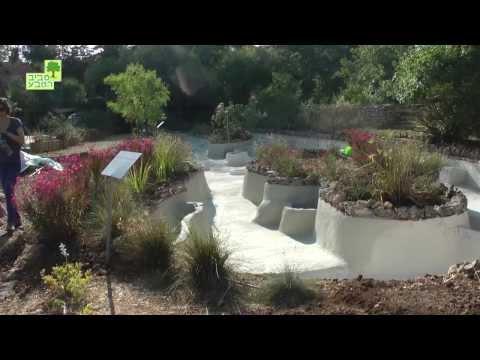 שיקום הבריכה ההיסטורית