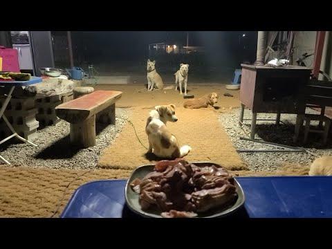 (LIVE)어차피 이렇게된거..야밤에 8둥이들 오리로스 먹방