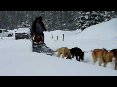 Dog-sledding at Lake Louise