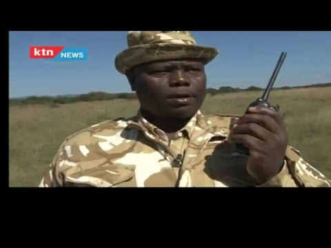 POACHING IN KENYA: Kenyan Rangers in action against Poachers