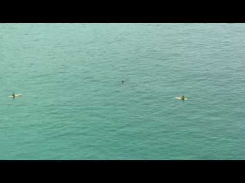 Reuzenhaai verrast surfers