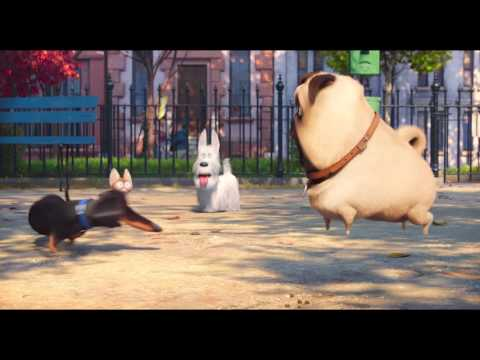 Preview Trailer Pets – Vita da animali, nuovo trailer