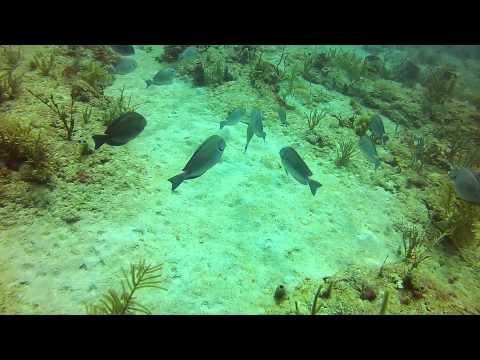 Nín thở 60s, bạn thấy gì được dưới đáy biển ?