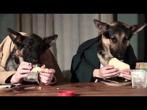 cani che mangiano a tavola