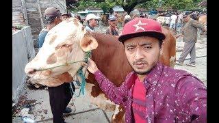 Video Grebeg Pasar Sapi Blora Stand Pedetan  Dari Harga 9 Juta Sampai 11 Juta 23 Jan 2019 MP3, 3GP, MP4, WEBM, AVI, FLV Januari 2019