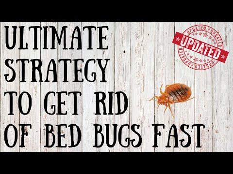 fast tips on getting rid of bed bugs yourself how to get rid of bed bugs. Black Bedroom Furniture Sets. Home Design Ideas