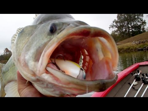 Big Bass Eating Squarebill Crankbaits – Spring Spawn Bass Fishing