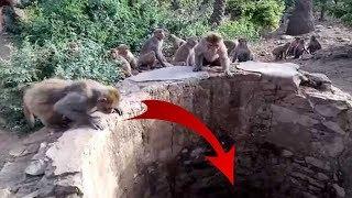 Video Warga Penasaran Banyak Monyet Melihat ke Bawah Sumur, Ternyata didalamnya Ada ini... MP3, 3GP, MP4, WEBM, AVI, FLV Agustus 2018