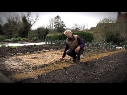 Experimenting with Dig and No-Dig Beds