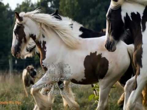 caballos salvajes - Ya lo dije en más de una ocasión me gustan mucho los caballos , y siempre me parecieron unos animales muy elegantes , en este además de fotos del este bello ...