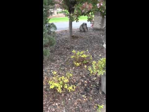 Working the neighborhood garden part 2
