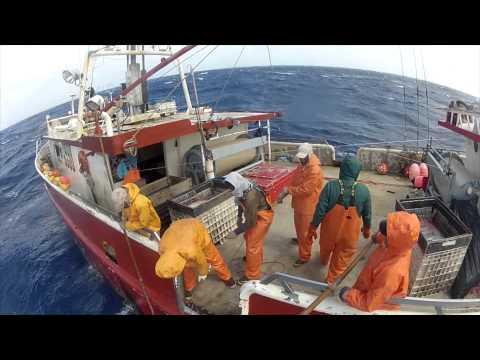 Wild Caught (swordfish documentary 2012)